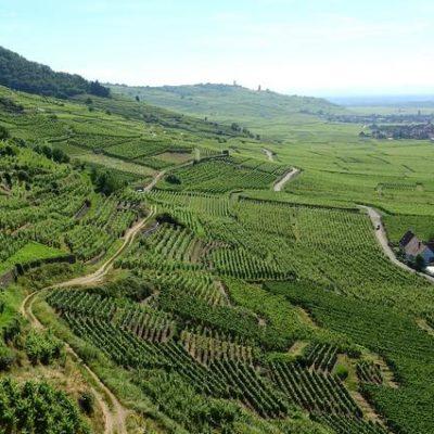 Vignes d'Alsace